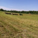 Hay on wagon